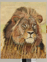 Male Lion Oil Painting