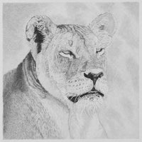 Female Lion Pencil Drawing
