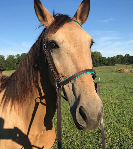 Custom BETA sidepull/bitless bridle – Frosty Hollow Creations