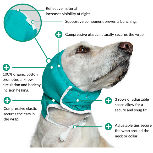 ear wrap hematoma dog diagram