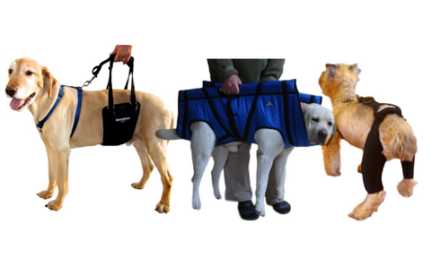 hind leg dog rehabilitation sling small large carrier