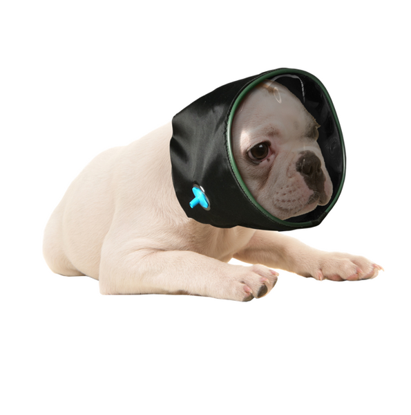 oxygen hood black animals dog