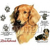 long haired Dachshund Shirt