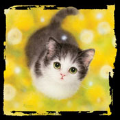 Kitty with yellow flowers