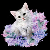 Lilac Kitty
