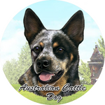 Australian Cattle dog Car Coaster