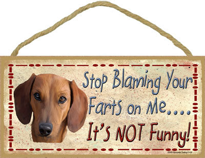 Stop blaming your farts- dachshund