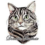 Domestic shorthair cat t-shirt