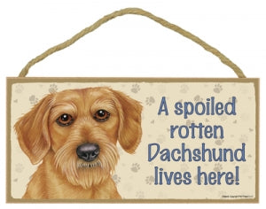 Dachshund- Wired Haired- A house is not a home