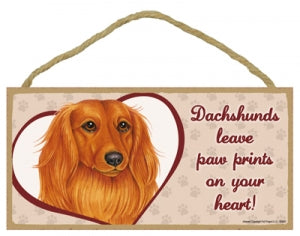 Dachshund - Long haired- A house is not a home