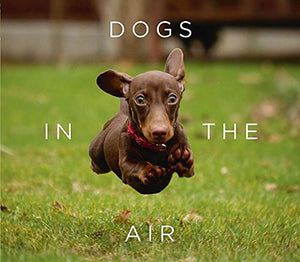 Dogs in the Air (Jack Bradley)