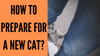 How to prepare for a new cat?