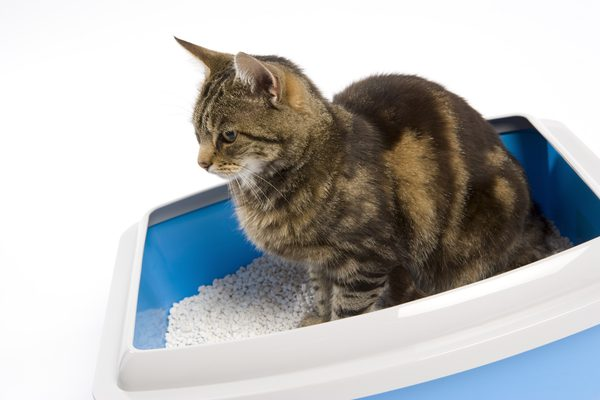 Finding the Best Spot for the Litter Box