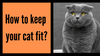 How to Keep Your Cat Fit?