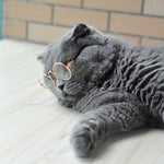 Transparent Cat-Eye Sunglasses
