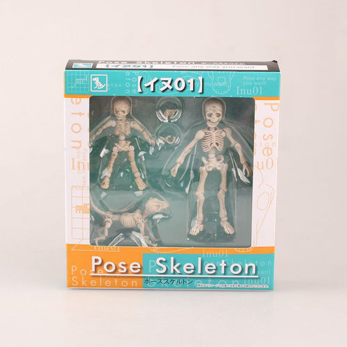 Mr. Bones - Skeleton Model with Dog