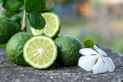 Featured ingredient Bergamot