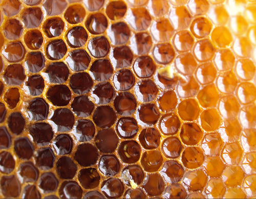 Featured ingredient Wild honey