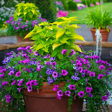 Plant in Containers