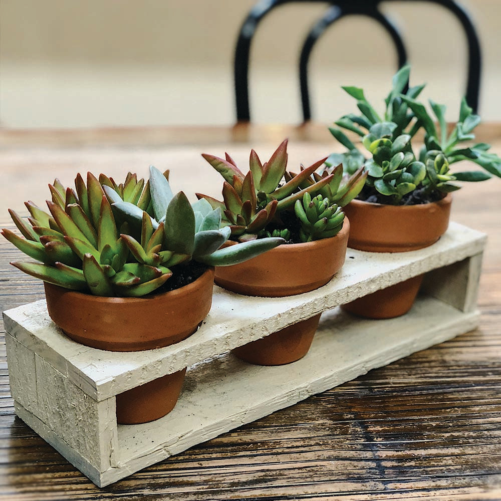 Whitewashed Wooden Stand with Succulents