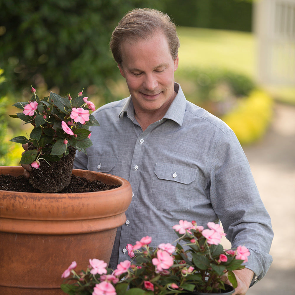 Mixed SunPatiens® Collection