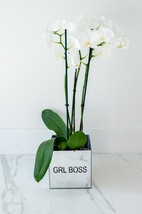 Acrylic Orchid Vase - GIRL BOSS
