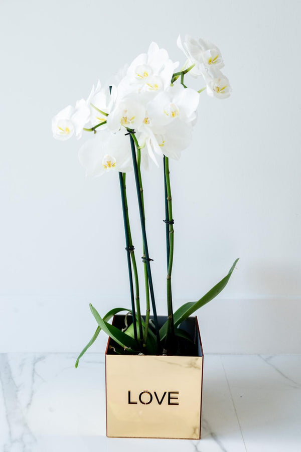 Acrylic Orchid Vase - LOVE GOLD
