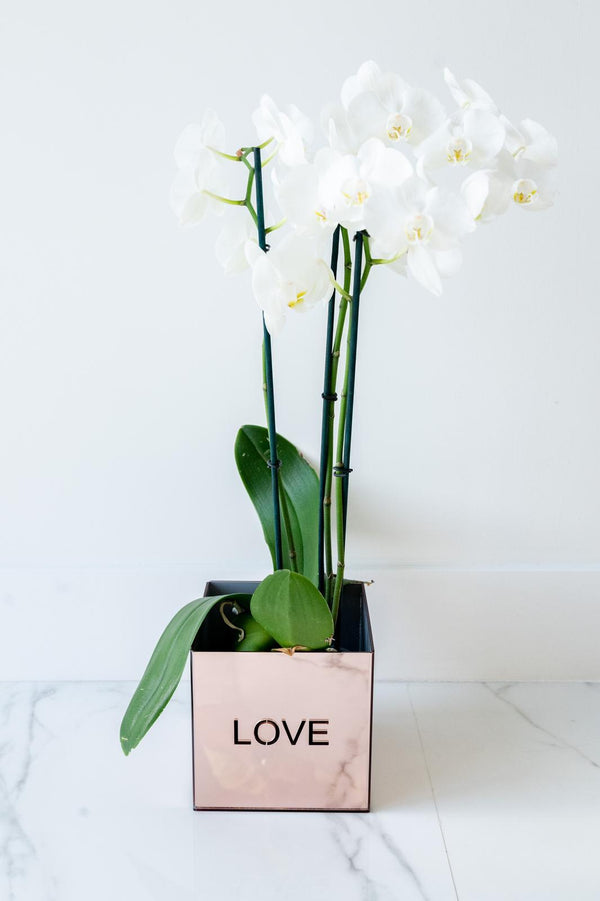 Acrylic Orchid Vase - LOVE ROSE