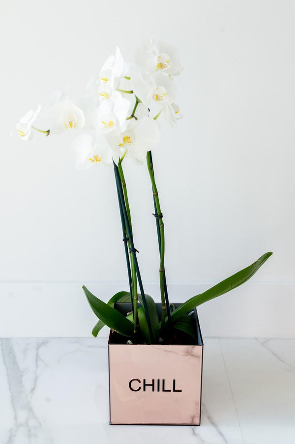 Acrylic Orchid Vase - CHILL ROSE