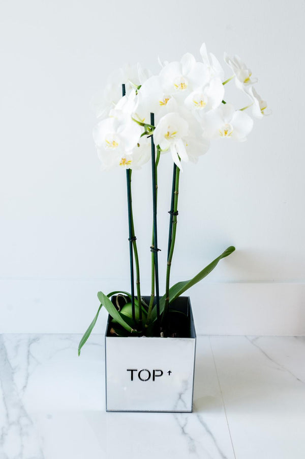 Acrylic Orchid Vase - TOP