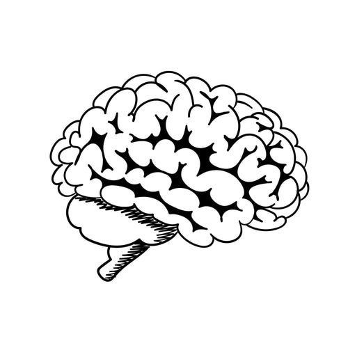 Brain Temporary Tatoo Design. Tags: Black and White, Minimal, Traditional, People