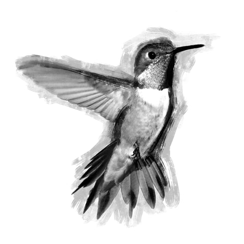 Black and White Hummingbird Temporary Tatoo Design. Tags: Animals, Realistic, Black and White,