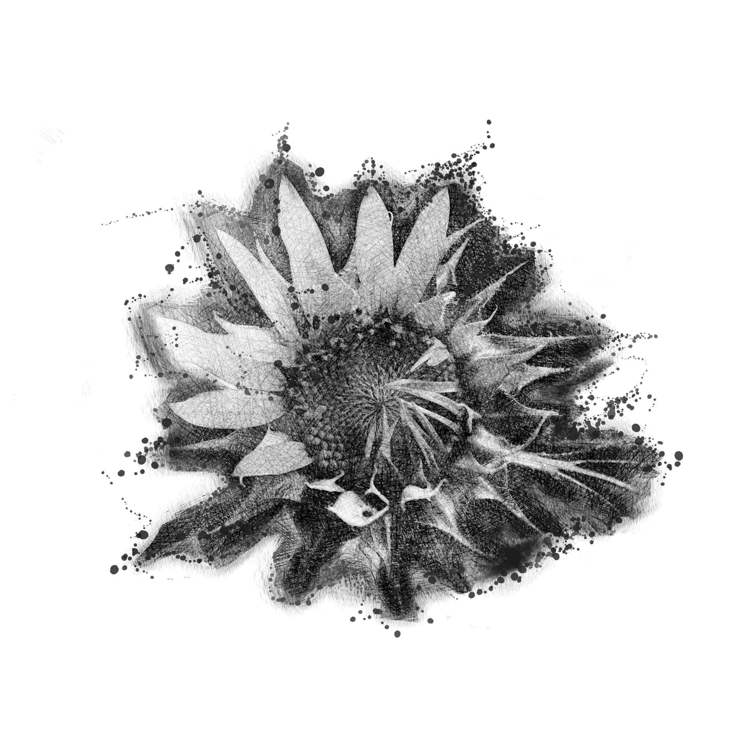 Sunflower Design InkDaze_JoseBorromeo