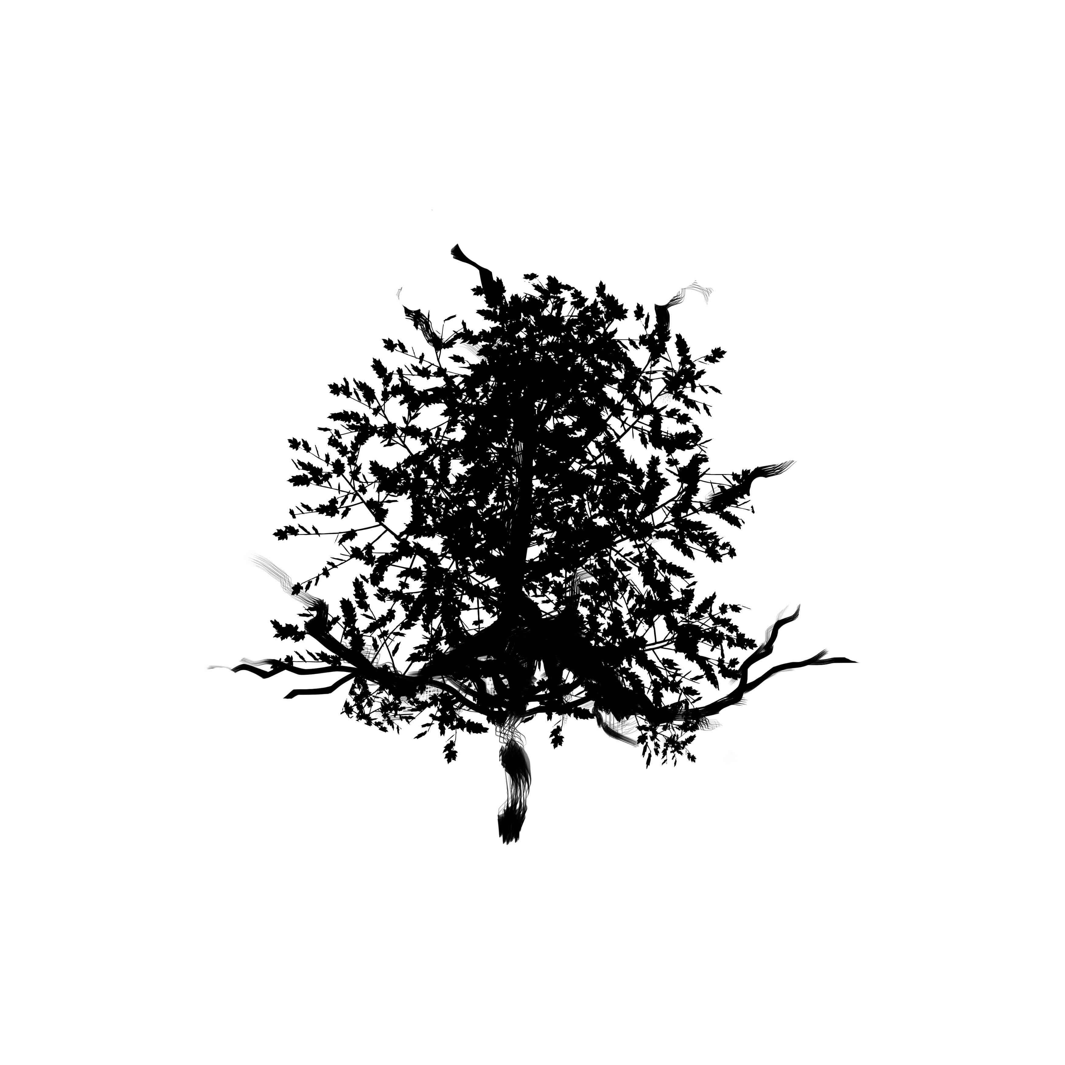 Inked Tree Temporary Tatoo Design. Tags: Nature, Black and White, ,