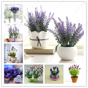 200 Pcs Import French Provence Lavender seeds very fragrant can grow well in Pot for Bonsai plant seeds mix colors garden decor