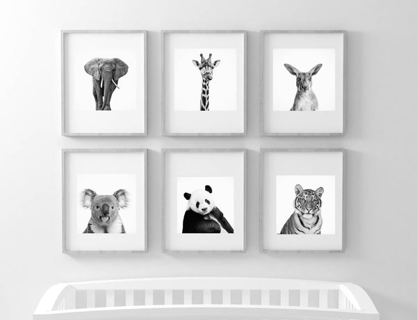 Animal Photography B&W set of six