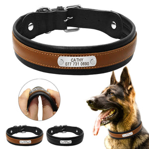 Padded leather dog collar with custom engraved name tag