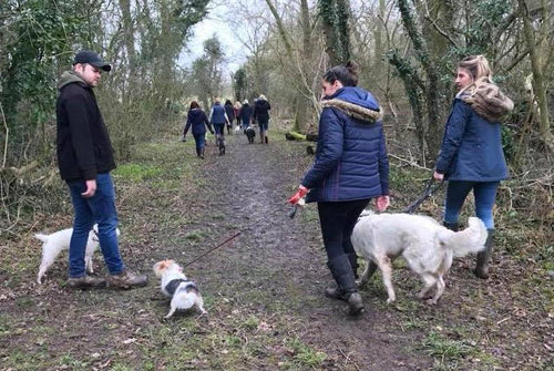 Group Socialisation Walk