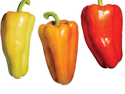 Gypsy Sweet Peppers - Organic
