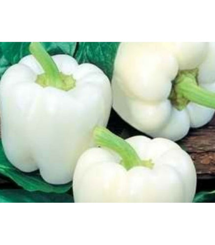 Ivory Bell Peppers - Organic
