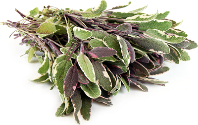 Fresh Sage - Bunch