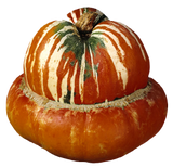Turkey Turban Squash - Organic