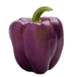 Purple Bell Peppers - Organic