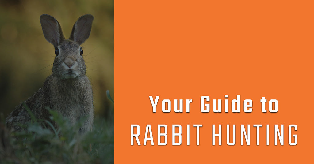 Your guide to rabbit hunting