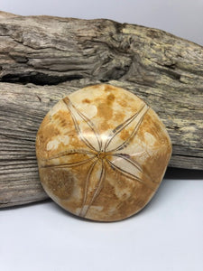 Fossilized Sand Dollar #4