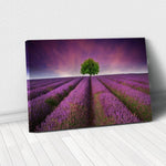 Tablou Canvas - [One Time Deal] Field of Lavender - Tablomag