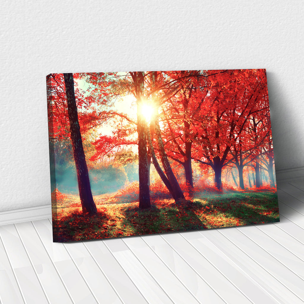 Tablou Canvas - Sunshine in Forest - Tablomag