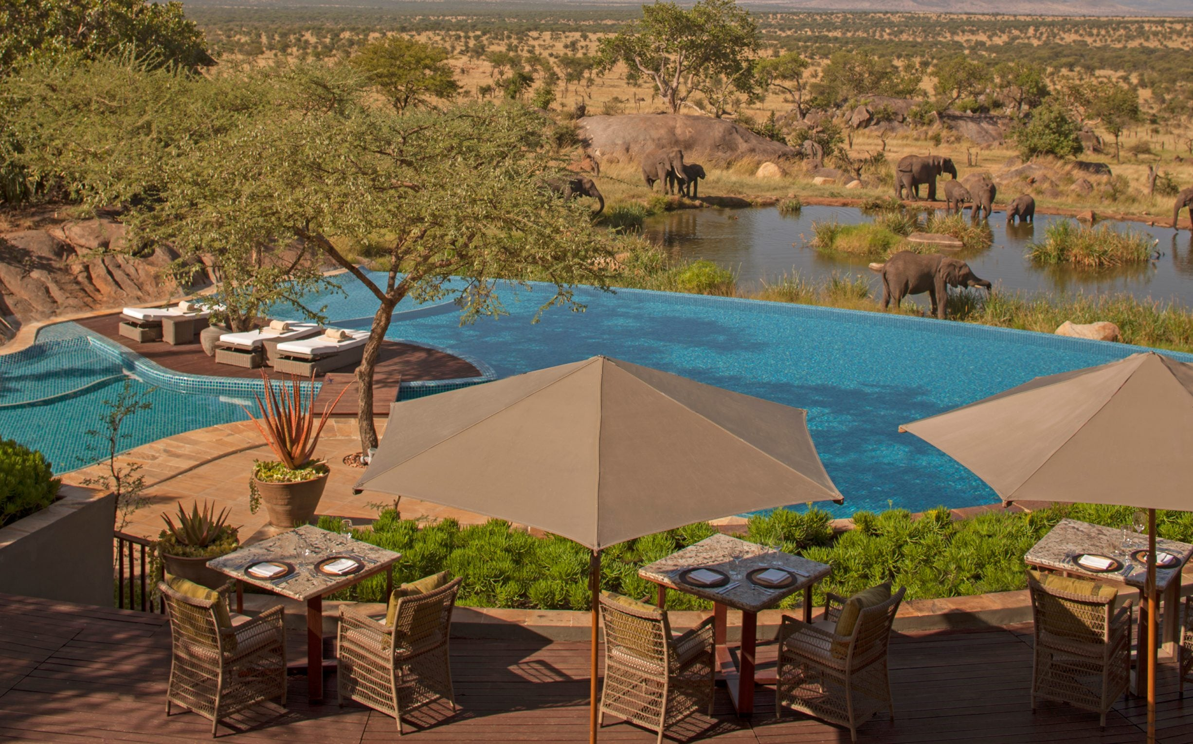 10 Best Hotel Swimming Pools Around The World - Four Seasons Safari Lodge Serengeti - LuxDeco.com Style Guide