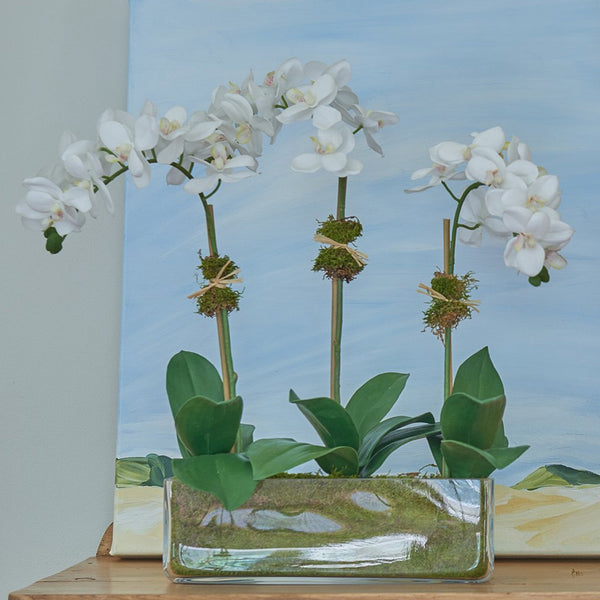 3 Stem Orchid Diane James featured