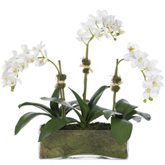 3 Stem Orchid Diane James 3 Stem Orchid